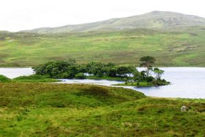 Scotland, Trees Island by elodie50a