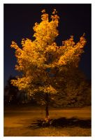 Golden Tree at night by rekokros