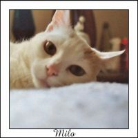 Meet Milo by dispirited