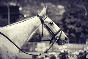 Relax by EquusAustralia