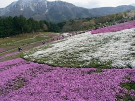 JAPAN STOCK FLOWER PLANT NO:040030001 by hirolus