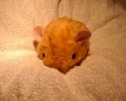 Baby Hamster by Plushbox