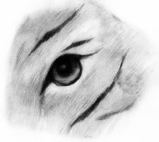 A Tiger's Eye - In Black and White by roamingtigress