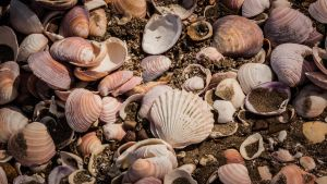Seashells by fjtu