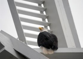 Eagle Spotting by Photos-By-Michelle