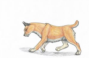 Young Caracal by BookThief17