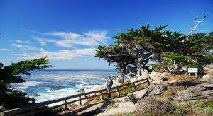 17 Mile Drive 3 by ajithrajeswari
