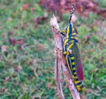 colour full grasshopper by laxmikantchaware