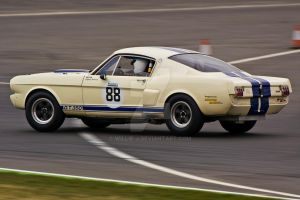 Shelby Mustang 350 GT by Willie-J