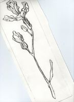 008 - Drypoint by plumcake-mery