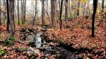 Defoliation In The Forest In Late October   by eskile
