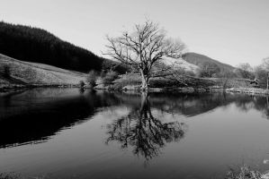 reflection by Laurenwyllie