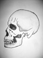 Human Skull by 31monkeys