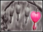 Bleeding Hearts by christineism
