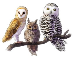 Owls by Krisantyne