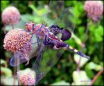 Dragonfly Grounded by AudraMBlackburnsArt