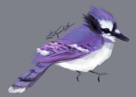 Smexy purple jay by DrizzleSnow