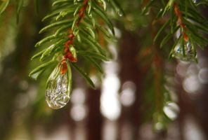 A drop of... ice by MirachRavaia