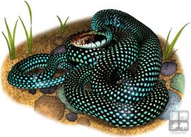 Speckled Racer by rogerdhall