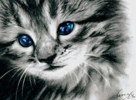 icy blue kitten by smitth