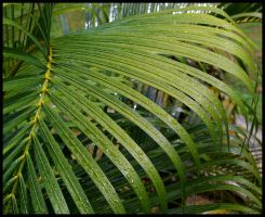 Water on a Palm Leaf by impgrrrl