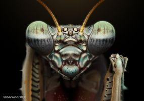 Praying Mantis Study by Susana-Santos