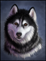 Malamute Matters Charity Auction Prize by pyro-helfier
