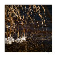 Grass of February by rici66
