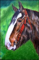 Drawing- Shire horse by Ennete