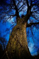 Tree at dusk by photosynthetique