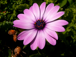 Pink Flower by RiverW
