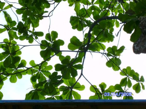 Green Leaves by aizu-marl