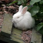Zoo Bunny Snoozes by TomiTapio