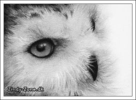 Snow Owl II by Zindy