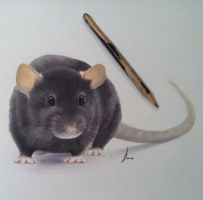 Rat by Alevire