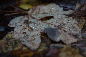 Drops on a leaf... by Mark-Heather