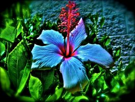 fun colored hibiscus by IcejCat