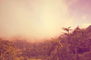 Foggy Kaimai ranges New Zealand by CathleenTarawhiti