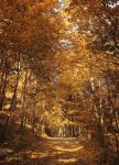 Autumn Road 7 by FrantisekSpurny