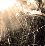 Cobwebs 2 by A-DD