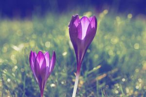 Brace yourself, spring is coming by KB-Fotografie