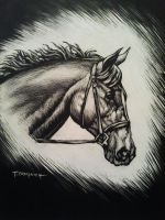 Study Of A Horse's Head by casey62
