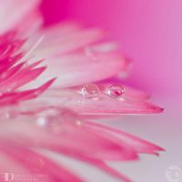 Drops of sweetness by FrancescaDelfino