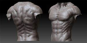 Male Anatomy - 01 by shoaibMalik
