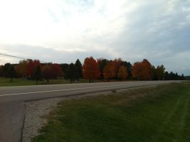 Fall Colors by dcrods