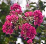 Blooms 8-11-14 by Tailgun2009