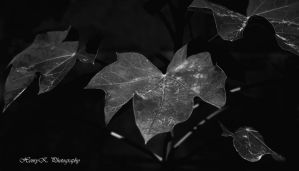 the-leaves III by fotoponono
