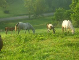 Mares and Foals by cattlebaron1