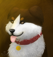 Border Collie by DOLFIY