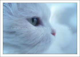 -Lilly- by donia